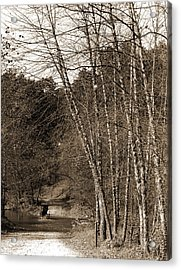 Black Birches, Zoo Park National Zoological Park Acrylic Print