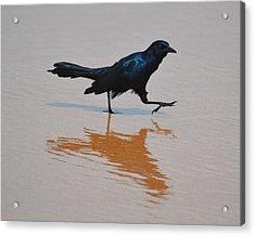 Black Bird - Strutting At The Beach Acrylic Print