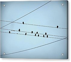 Black Birds Waiting In Blue Acrylic Print