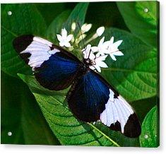 Black Blue And White Acrylic Print by Karen Stephenson