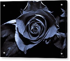 Black Blue Rose Acrylic Print by Yvon van der Wijk