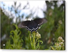 Black Butterfly Wing Macro Motion Blur At Bottom Of Grand Canyon Acrylic Print by Shawn O'Brien