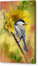 Black Capped Chickadee Checking Out The Sunflowers Acrylic Print