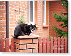 One Lonely Stray Black Cat Sitting On Fence  Acrylic Print by Arletta Cwalina