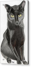 Black Cat Acrylic Print by Bav Patel
