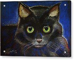 Black Cat Acrylic Print by Dan Terry