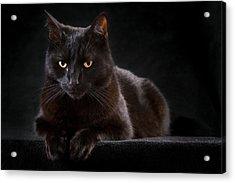 Black Cat Acrylic Print by Dirk Ercken