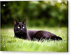 Black Cat Lying In Garden Acrylic Print