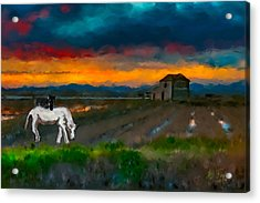 Acrylic Print featuring the photograph Black Cat On A White Horse by Juan Carlos Ferro Duque