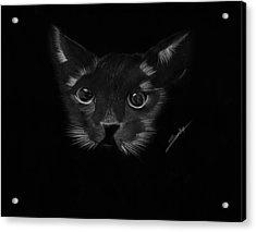 Black Cat Acrylic Print by Saki Art
