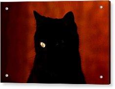 Black Cat - Yellow Eye Acrylic Print by Robert  Rodvik