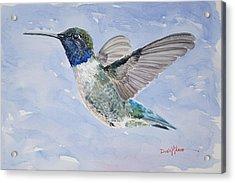 Da194 Black Chinned Hummingbird By Daniel Adams Acrylic Print