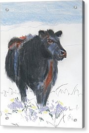 Black Cow Drawing Acrylic Print by Mike Jory
