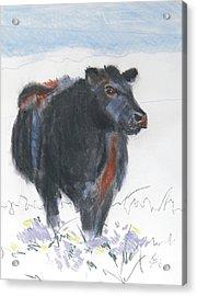 Black Cow Drawing Acrylic Print