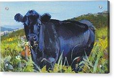 Cows Dartmoor Acrylic Print