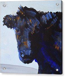 Black Cow Head Acrylic Print