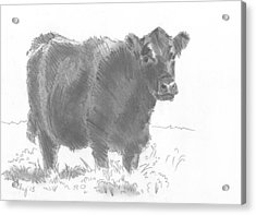 Black Cow Pencil Sketch Acrylic Print