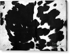 Acrylic Print featuring the photograph Black Cowhide by Gunter Nezhoda
