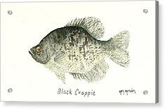 Black Crappie Acrylic Print