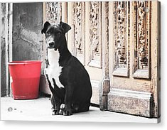 Black Dog Guarding A Vintage Wooden Door Acrylic Print