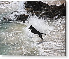 Black Dog Acrylic Print by Tom Conway