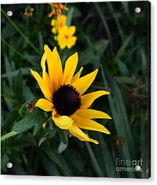 Acrylic Print featuring the photograph Black-eyed Susan Glows With Cheer by Luther Fine Art
