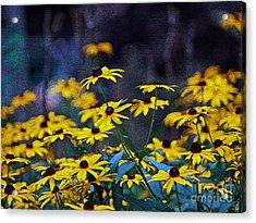Black-eyed Susans Acrylic Print