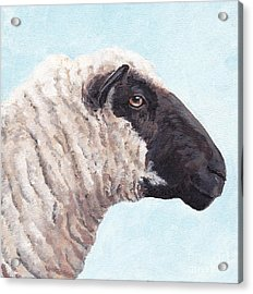 Black Face Sheep Acrylic Print by Charlotte Yealey