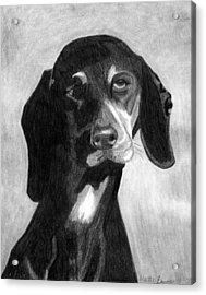 Black Forest Hound Dog Portrait  Acrylic Print by Olde Time  Mercantile