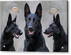 Black German Shepherd Dog Collage Acrylic Print