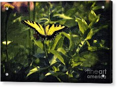 Black Gold Oil Acrylic Print by Cris Hayes
