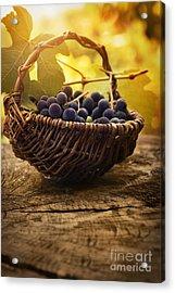 Black Grapes Acrylic Print by Mythja  Photography