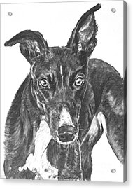 Black Greyhound Sketch Acrylic Print