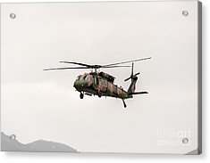 Black Hawk  Acrylic Print