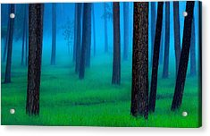 Black Hills Forest Acrylic Print