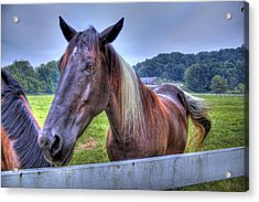 Black Horse At A Fence Acrylic Print