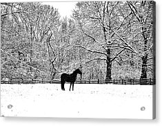 Black Horse In The Snow Acrylic Print by Bill Cannon