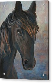Black Horse Acrylic Print by Marco Busoni