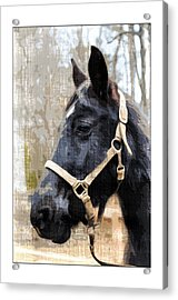 Black Horse Acrylic Print by Susan Leggett
