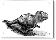 Black Ink Drawing Of Tarbosaurus Bataar Acrylic Print by Vladimir Nikolov