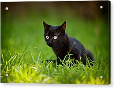 Black Kitten Acrylic Print