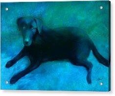 Black Lab Acrylic Print by Ann Powell