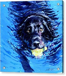 Black Lab  Blue Wake Acrylic Print by Molly Poole