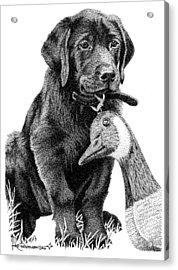 Black Lab Puppy Acrylic Print by Rob Christensen