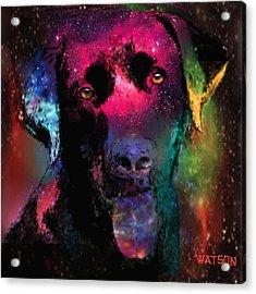 Black Labrador Dog Acrylic Print by Marlene Watson