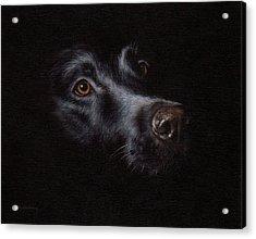 Black Labrador Painting Acrylic Print