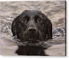 Black Labrador Portrait II Acrylic Print