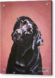 Black Labrador Portrait Painting Acrylic Print