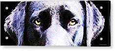 Black Labrador Retriever Dog Art - Lab Eyes Acrylic Print by Sharon Cummings