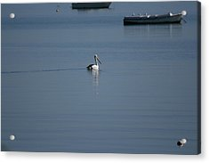 Acrylic Print featuring the painting Black Line Pelican  Calm Water by Phoenix De Vries